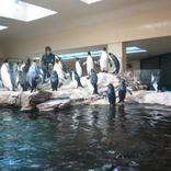 Zoo Schönbrunn, Vídeň 16.12.2017