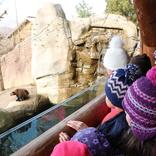 Zoo Brno a Planetárium Brno 13.2.2019